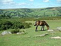 Widecombe in the Moor from On High - geograph.org.uk - 210965.jpg