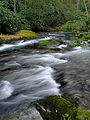 Wild Creek (1).jpg