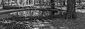 Wilde zwijnen (Sus scrofa) zoel. Locatie, Kroondomein Het Loo 02.jpg