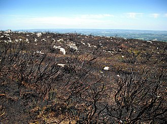 Blorenge - Wildfire damage near the top of Blorenge, near Abergavenny, south Wales, in 2010.