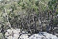 Wog Wog to Corang Peak, Corang Arch and Canowrie Brook, Morton National Park 30.jpg