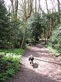 Wood Adjacent to Halton Lane - geograph.org.uk - 1379562.jpg