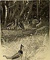 Wood folk at school (1903) (14597434458).jpg