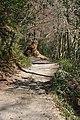 Woodland Footpath - geograph.org.uk - 1215171.jpg