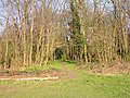 Woodland at Sheldwich Lees - geograph.org.uk - 386729.jpg