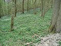 Woods on Cockshot Hill - geograph.org.uk - 466648.jpg