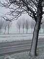 Woudseweg - 2008 - panoramio.jpg