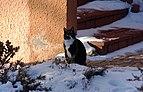 Wraxall 2010 MMB 26 Smudge.jpg