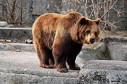 Ogród Zoologiczny w Warszawie – Wikipedia, wolna encyklopedia