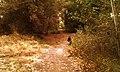 Yakima Greenway - panoramio (18).jpg