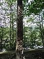 Zakopane Koscieliska cm Na Peksowym Brzysku034 A-1109 M.JPG