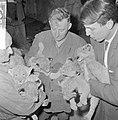 Zeven jonge leeuwen in Burgers Dierenpark te Arnhem, de jonge leeuwtjes, Bestanddeelnr 916-6003.jpg