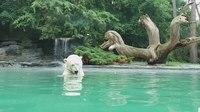 File:Zoo de La Fleche 20180601 2.webm