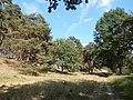 +20180611Müritz-Nationalpark.Feisneck See.-027.jpg
