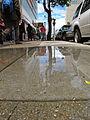 = puddle love (5805120385).jpg