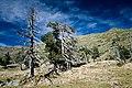 Árboles secos - panoramio.jpg