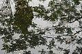 Αισθητικό Δάσος Καισαριανής 5.jpg