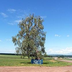 Береза у дороги - panoramio.jpg