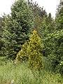 Ботанічний сад ДНУ 26.JPG