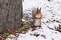Білочка у Парку Пушкіна.jpg