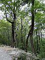 Верхний парк Сафари-парка. - panoramio.jpg
