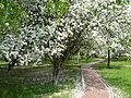 Весна в Московском саду. - panoramio.jpg