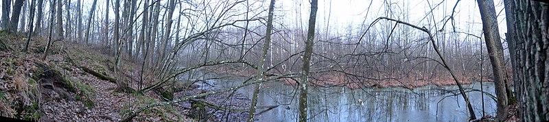 """File:Вид на болото """"Чорний Ліс"""" з південного кордону.jpg"""