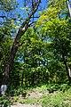 Гримайлівський парк.jpg