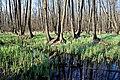 Заплавний ліс по р.Чорний Жеребець.jpg
