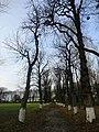 Каштанова алея парку Лизогубів.jpg