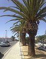 Лагос (Португалия) - panoramio (28).jpg