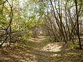 Лесная дорожка - Forest road - panoramio.jpg