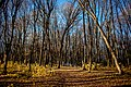 Лісогринівецьки ліс.jpg