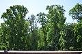 Наводницкий парк в Киеве. Фото 68.jpg