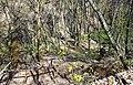 Непран Вячеслав, Пантелеймонова криниця, гідрологічна Пам'ятка природи, 44-233-5015, 49°28'01.1N 38°54'43.7E (2).jpg