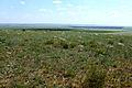 Оренбургская степь - panoramio (6).jpg