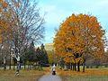 Осенью в парке Авиаторов.JPG