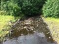 Пудож (река, впадает в Онежское озеро).jpg