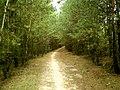 Сцяжынка ў лесе - panoramio.jpg