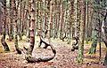 Танцующий Лес.jpg