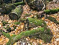 Украина, Киев - Голосеевский лес 149.jpg