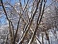Украина, Киев - Голосеевский лес 247.JPG