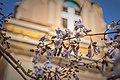Храм Іоанна Богослова, квіти.jpg