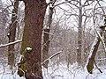 Чернечий Ліс 12.jpg