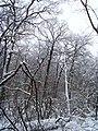 Чернечий Ліс 6.jpg