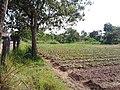 หมู่บ้าน นาพิพาน ต.ปะโค เมือง หนองคาย - panoramio (11).jpg
