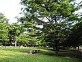 世田谷区立東野川広場 - panoramio.jpg