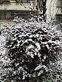 南京雪景20181230 01.jpg