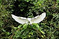 展翅 Extending Wings - panoramio.jpg