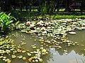 山腳國小生態池 Eco pond in Shanjiao Elementary School - panoramio.jpg